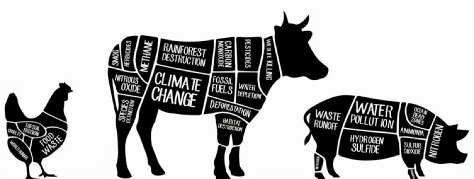 HOW VEGANISM COULD SAVE THE PLANET