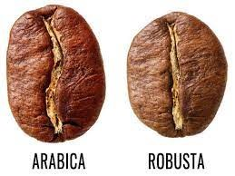 The difference between robusta and arabica